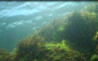 diving bulgaria10